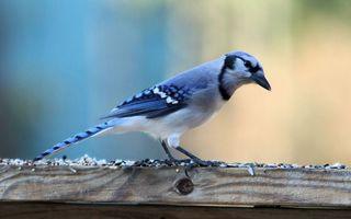 Бесплатные фото птичка,клюв,крылья,хвост,перья,лапки,доска