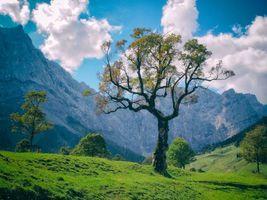 Бесплатные фото горы, холмы, деревья, пейзаж