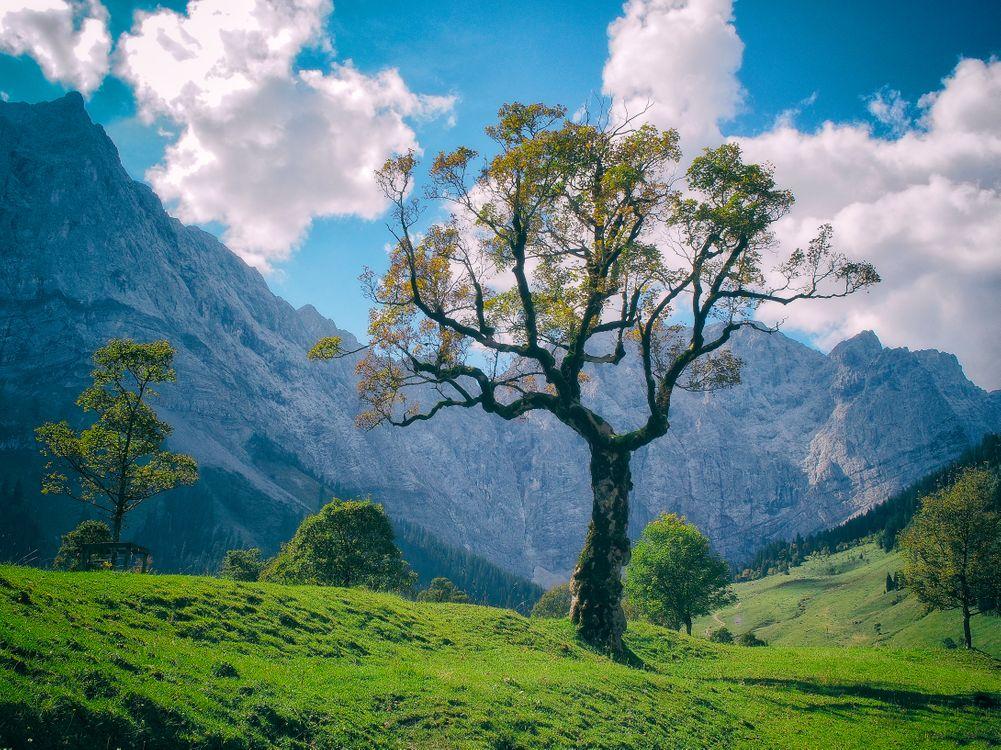 Фото бесплатно горы, холмы, деревья, пейзаж - на рабочий стол