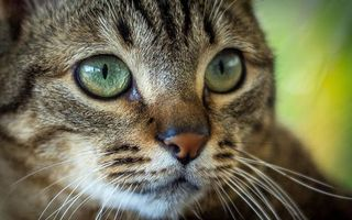 Фото бесплатно кот, кошка, морда, взгляд