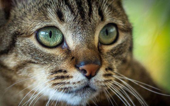 Заставки кот, кошка, морда