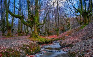 Фото бесплатно Otzarreta, Bizkaia, Spain