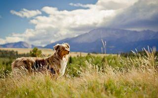 Бесплатные фото пес,морда,шерсть,трава,деревья,горы,небо