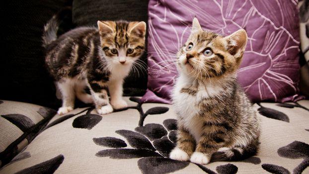 Бесплатные фото котята,морды,лапы,шерсть,диван,подушки
