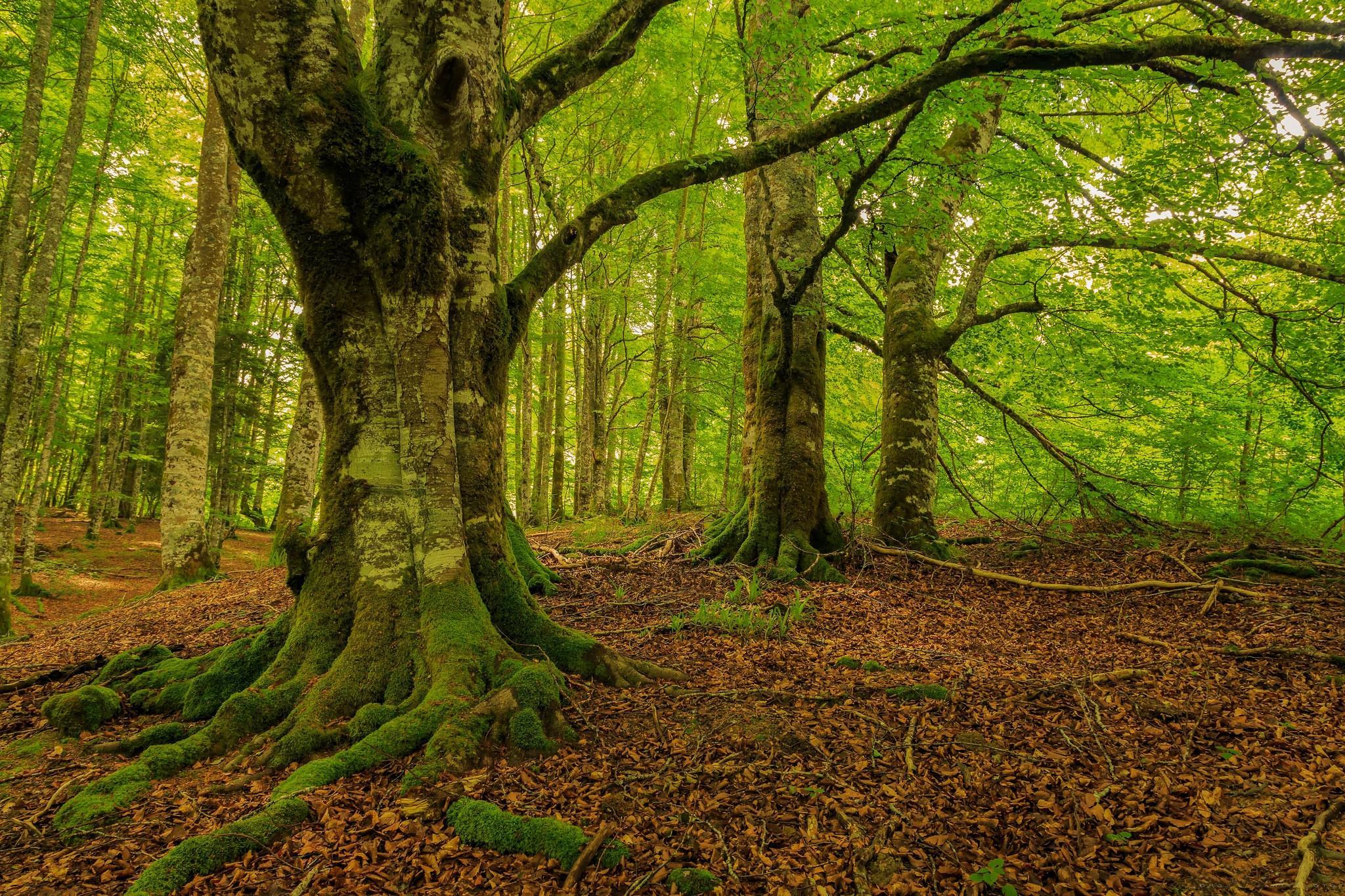 вместе елочка-красавица картинка про деревьев вблизи своем участке клубневые