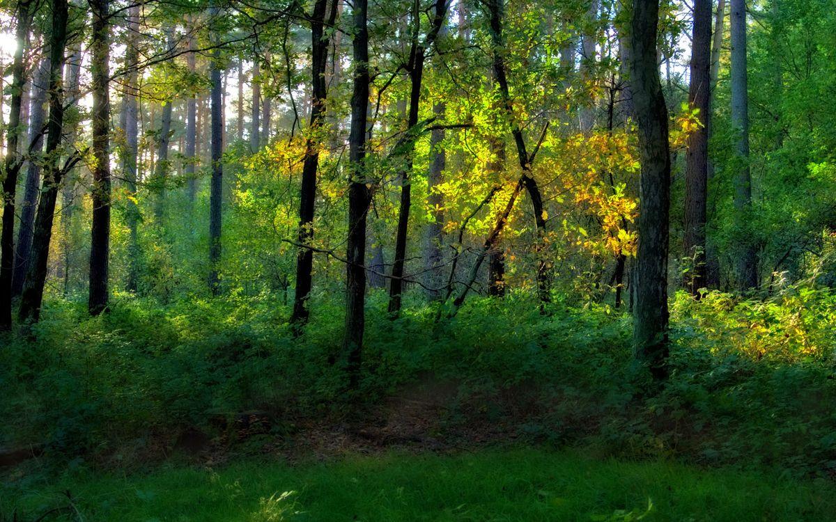 Photos for free grass, branches, bush - to the desktop