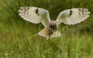 Бесплатные фото сова,крылья,хвост,перья,лапы,полет,взор