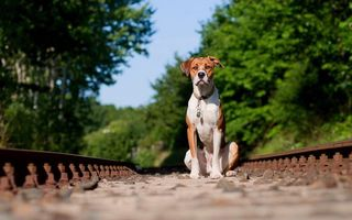 Бесплатные фото пес,морда,лапы,ошейник,медальон,железная дорога,рельсы