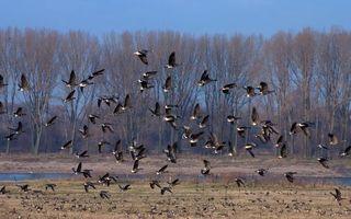 Бесплатные фото птицы,стая,полет,поле,река,деревья