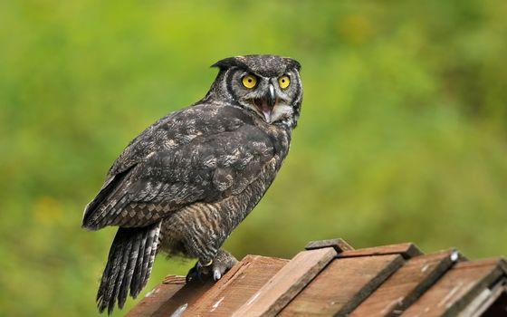 Заставки сова, крыша, природа