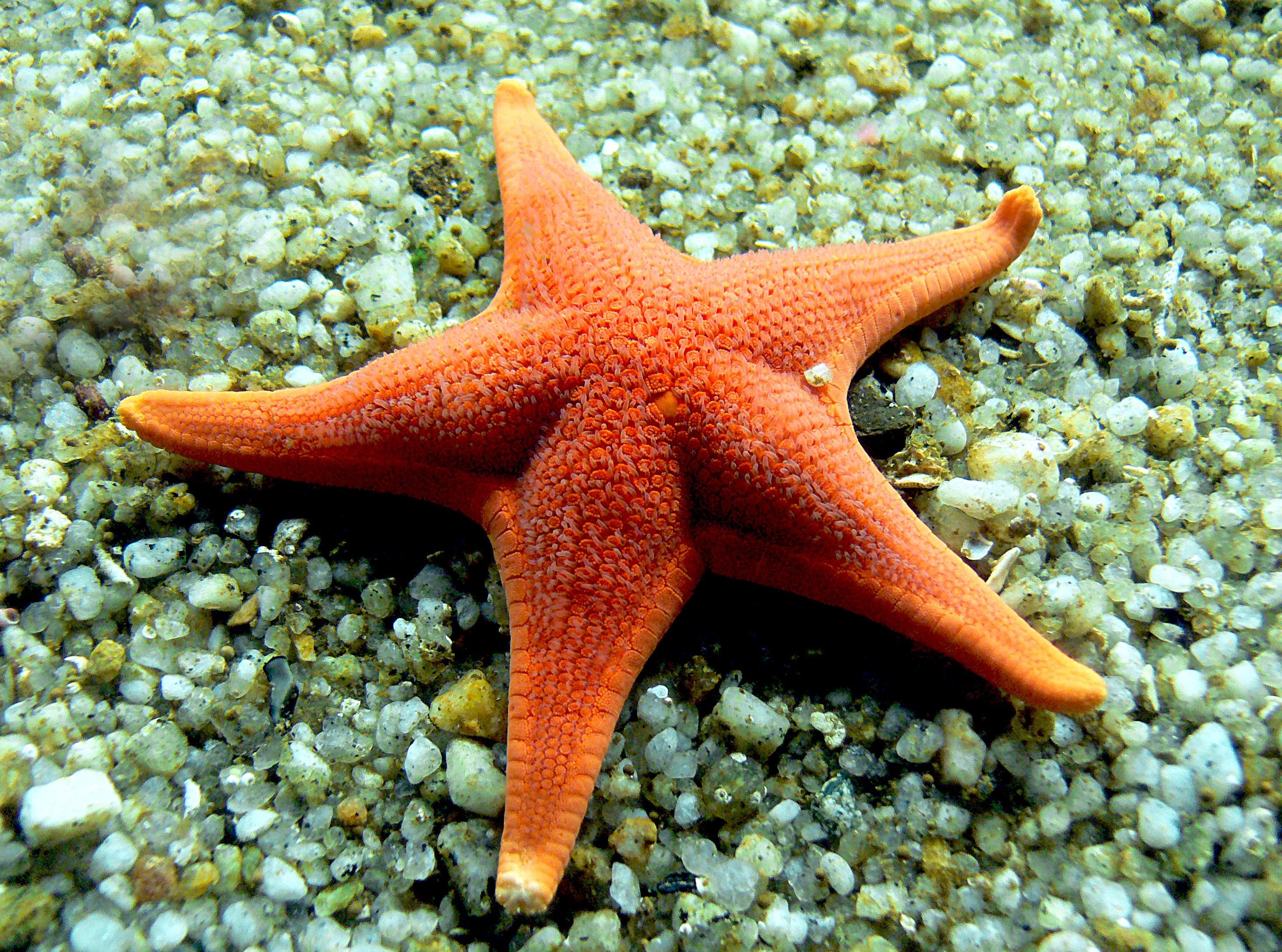 обои море, морское дно, морская звезда, камни картинки фото