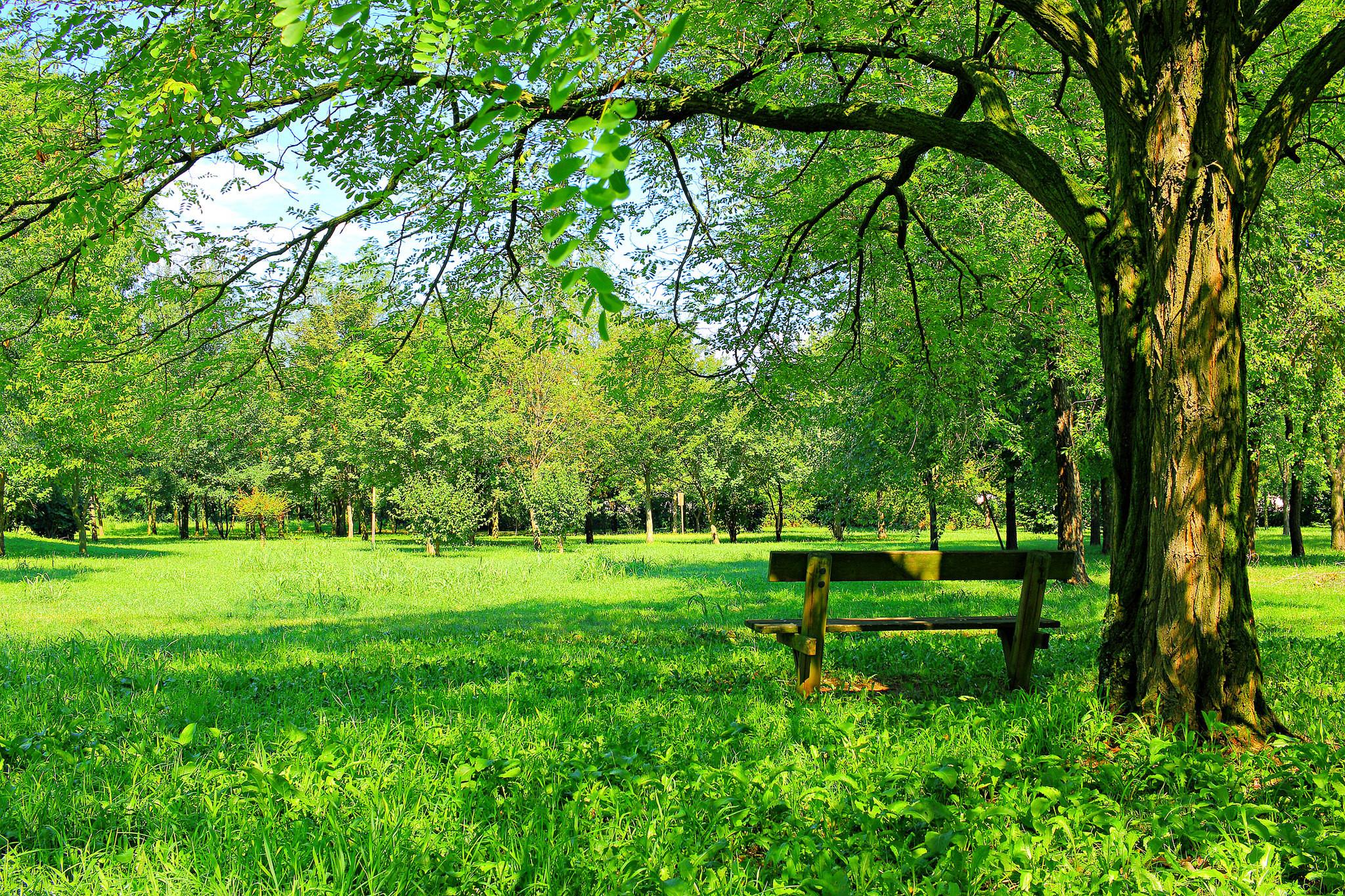 деревья на поляне  № 2050722  скачать