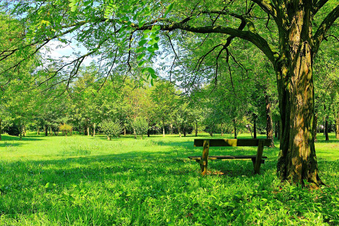 Обои парк, поляна, деревья, лавочка, пейзаж на телефон | картинки пейзажи