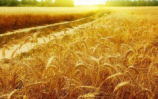 Фото бесплатно Восход, дорога, пшеница