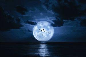 Заставки большая Луна, чайки, океан, ночь