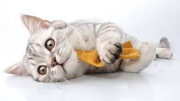 Бесплатные фото котенок и сафетка