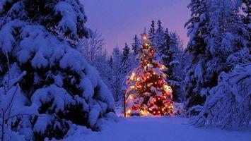 Бесплатные фото новогодняя елка,лес,сугробы,снег