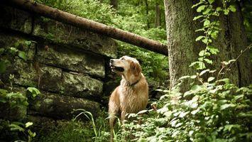 Фото бесплатно собака, растительность, морда