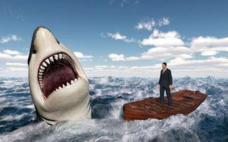Фото бесплатно опасность, акула, хищник