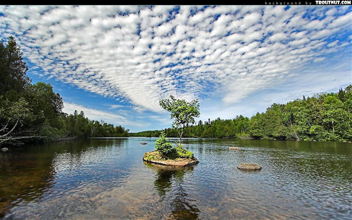 Фото бесплатно река, островок, дерево, берега, лес, небо, облака, природа