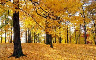 Фото бесплатно осень, роща, деревья, листья, желтые