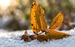 Бесплатные фото зима,снег,листья,желтые,прожилки