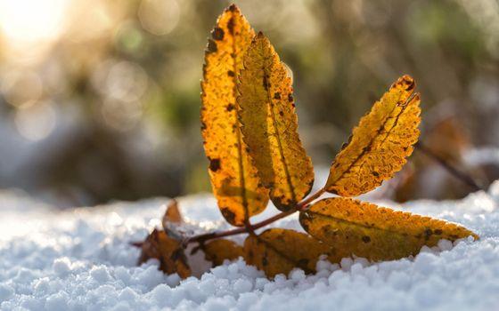 Фото бесплатно зима, снег, листья