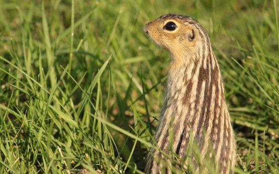 Фото бесплатно морда, трава, глаза