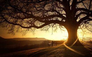 Бесплатные фото лавочка, скамейка, дерево, ветви, закат, солнце