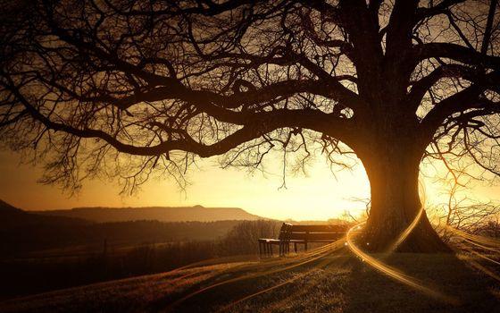 Бесплатные фото лавочка,скамейка,дерево,ветви,закат,солнце