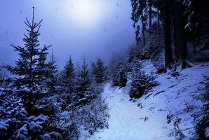 Бесплатные фото зима,ночь,лес,снег,деревья,тропинка,пейзаж