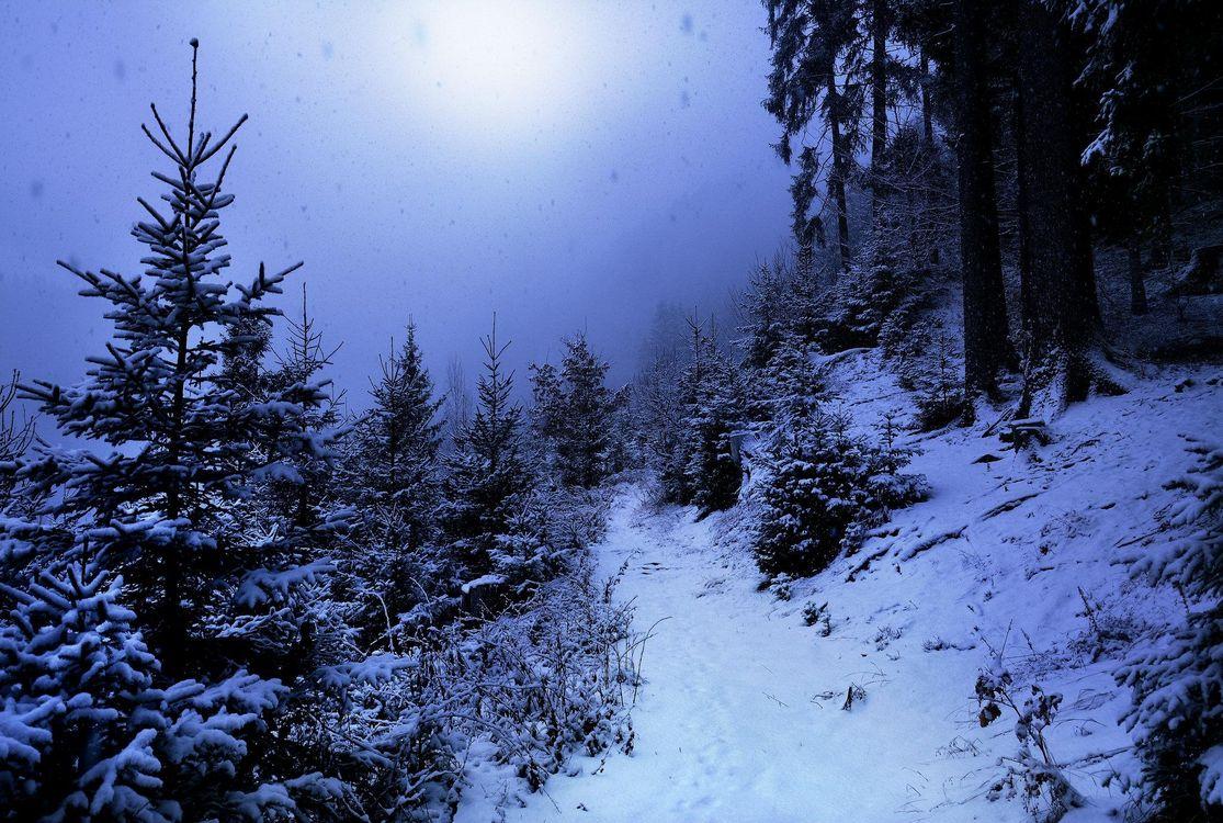 Фото бесплатно зима, ночь, лес - на рабочий стол
