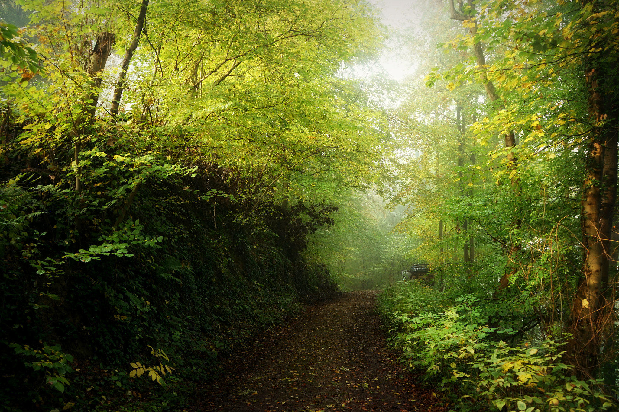 Обои лес, деревья, дорога, природа