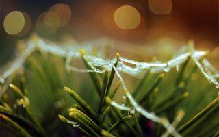 Заставки мокрая паутина, трава