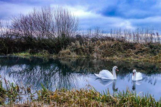 Бесплатные фото Лебеди в угасающем свете,канал Поклинтон,Йоркшир,Великобритания