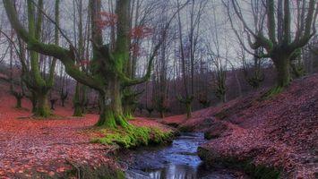 Бесплатные фото Лес,деревья,речка,Hayedo de Otzarreta,Баскония,Страна Басков,Испания
