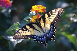 Заставки бабочка, цветок, цветы