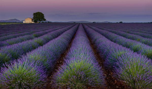 Photo free lavender, landscape, Plateau de Valensole