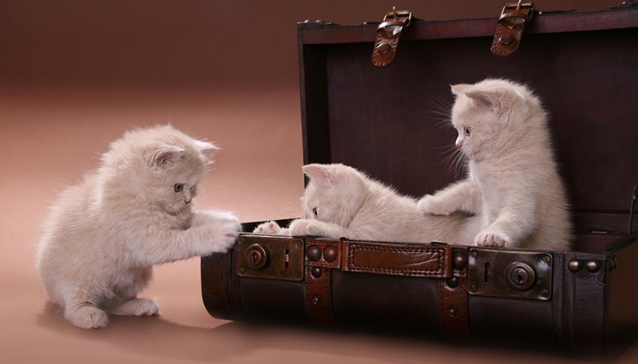 Обои котята, животные, кошки