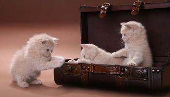 Фото бесплатно котята, животные, кошки