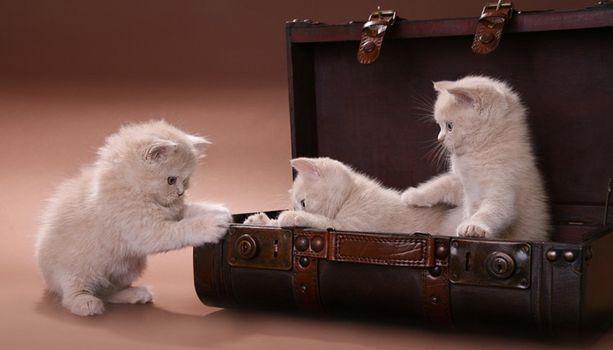 Бесплатные фото котята,животные,кошки
