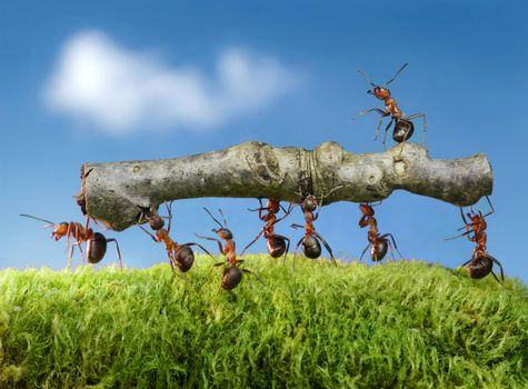 Photo free ants, insects, macro
