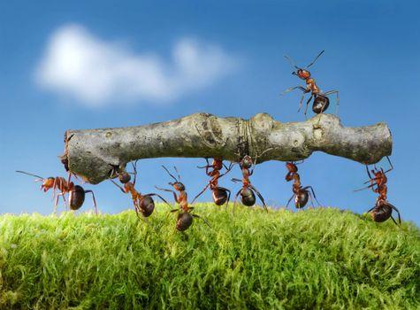 Фото бесплатно муравьи, насекомые, макро