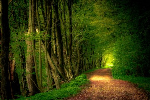 Photo free road through the forest, green foliage, road in the forest
