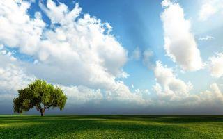 Бесплатные фото поле,трава,дерево,крона,горизонт,небо,облака