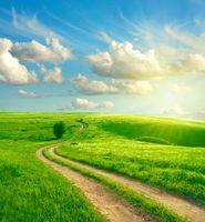 Заставки поле, дорога, дерево