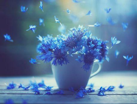 Бесплатные фото чашка,васильки,цветы,флора