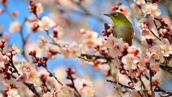 Бесплатные фото дерево,ветви,цветы,птичка,перья,клюв