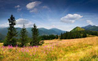 Бесплатные фото горы,деревья,трава,цветы,небо,облака