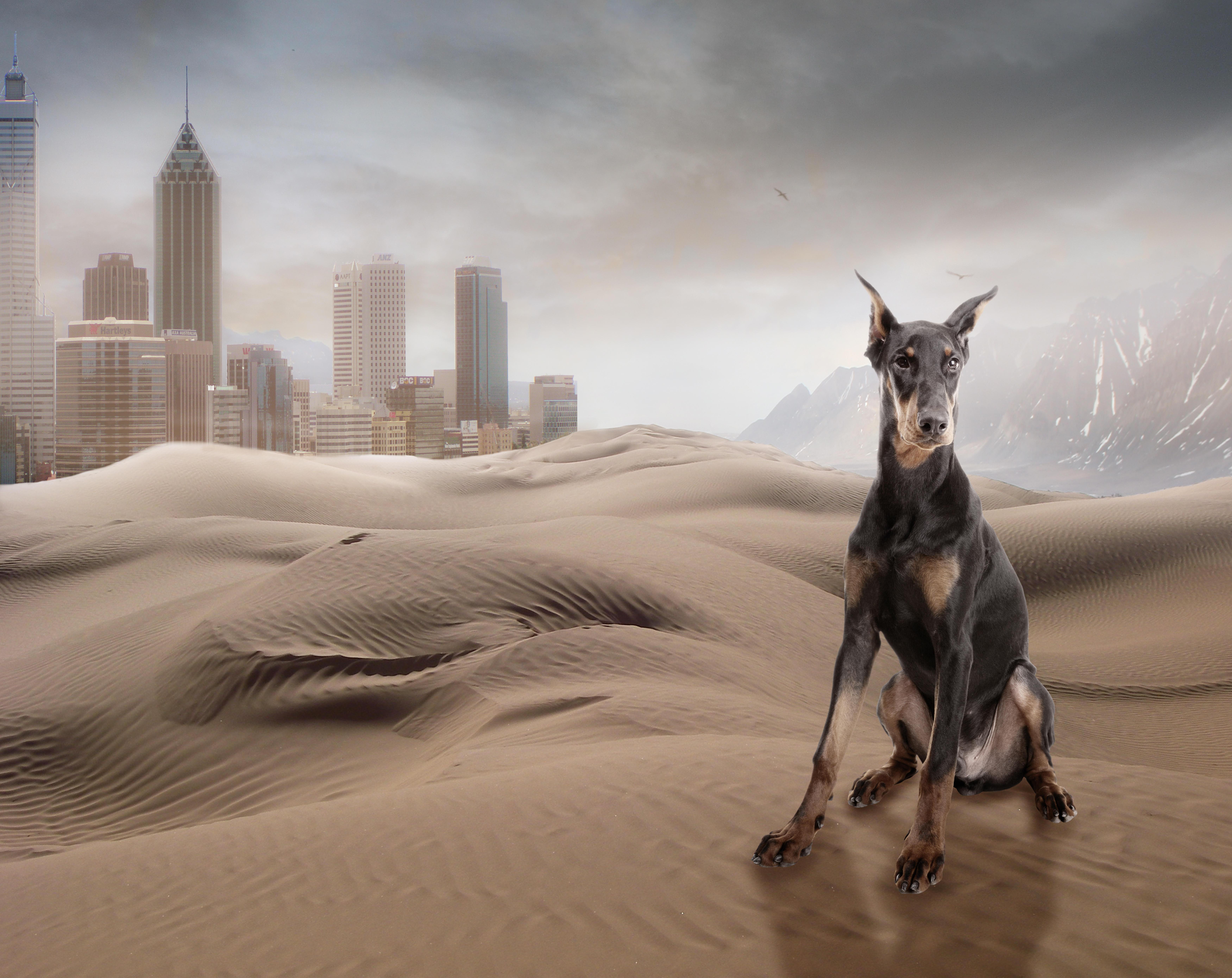 Обои пески, хлмы, город, собака